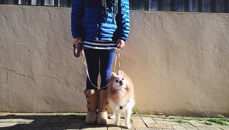 A woman holds a retractable leash handle in one hand and grabs the cord in the other. A Pomeranian stands next to her on the leash.