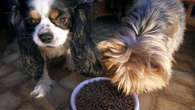 Two dogs share a bowl of food.