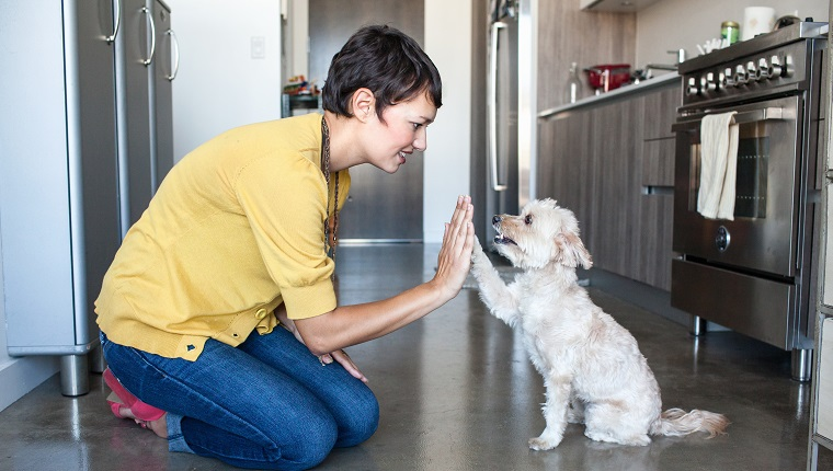 A young woman kneels down to give a small, white dog a high five in the kitchen. Bond with your dog for National Train Your Dog Month.