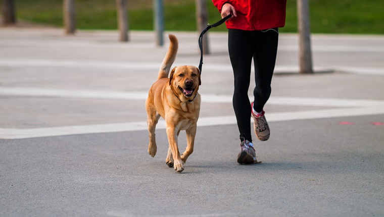 A happy brown dog walks next to his owner who wears a jogging suit.