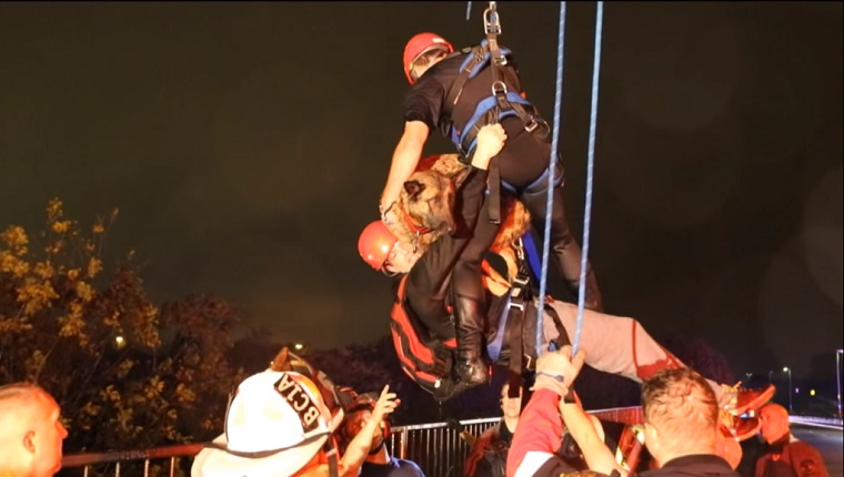 A rescuer hoists a man and his dog on ropes as they are lowered to dry land.