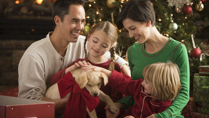 family with christmas puppy