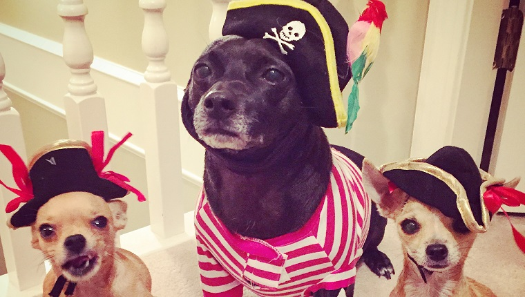 We might look cute but we are very mean pirates!