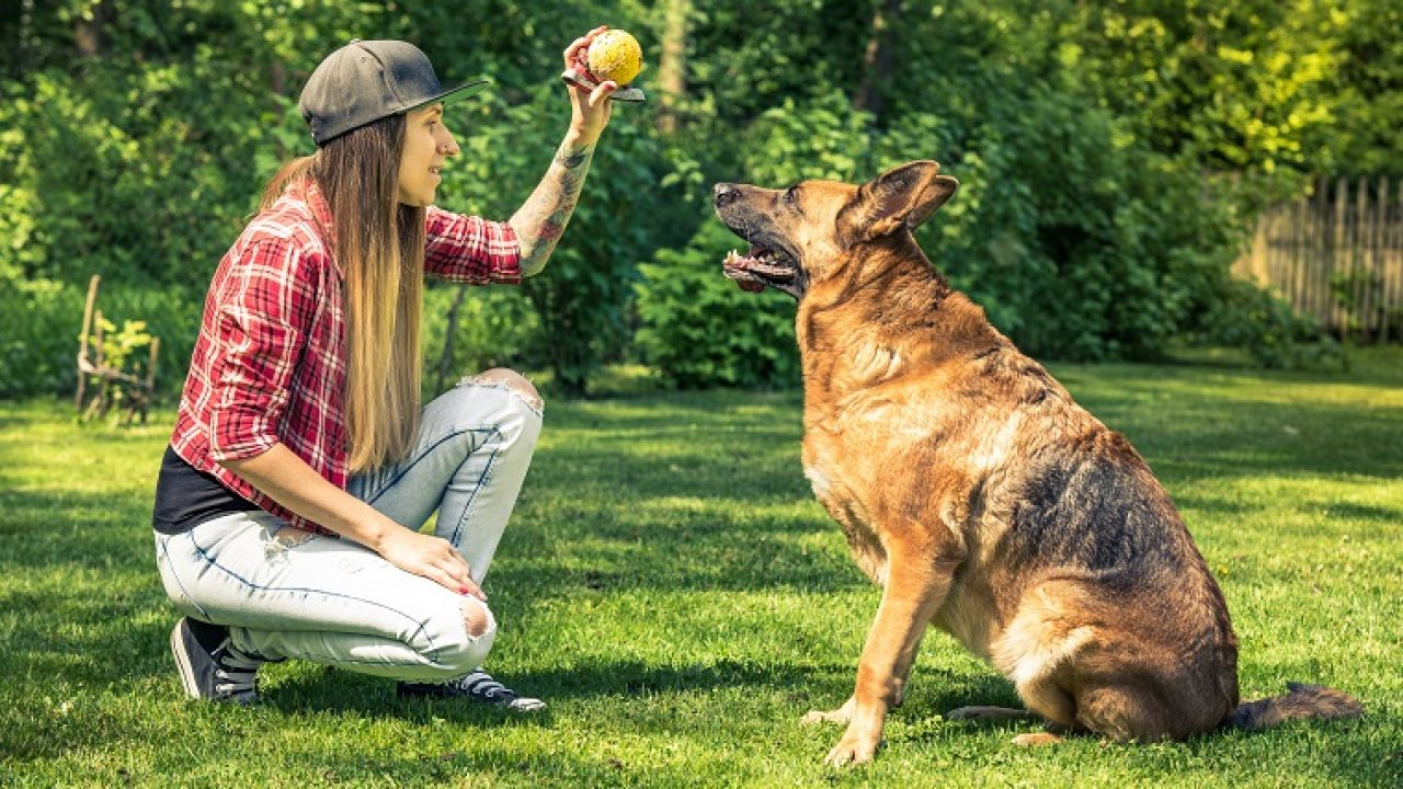 Great Methods To Help Train Your Dog