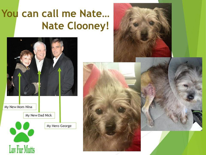 george-clooney-adopts-dog