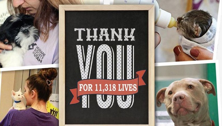 """A collage of animals being cared for with the words """"Thank You For 11,318 Lives"""" in the foreground."""