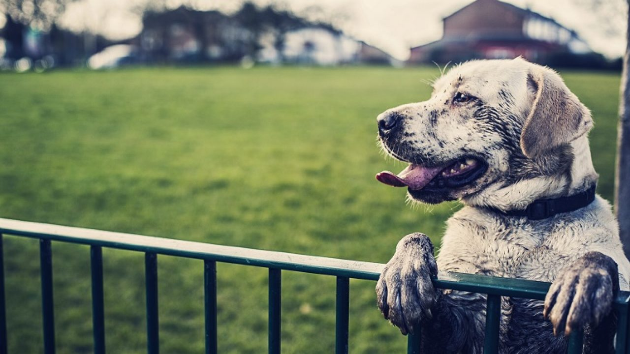 Behaviorists Say Uk Dogs Are Getting Depressed Because Of Global Warming Dogtime