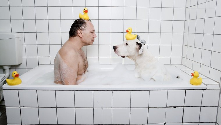 A dog sits in a tub facing his human. Both have rubber duckies on their heads. You can tell it's getting really awkward.