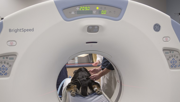 A dog lies in an MRI scanner.