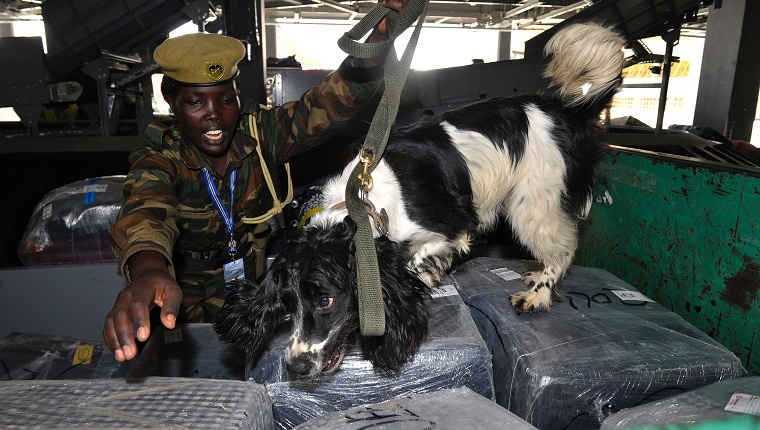 TO GO WITH AFP STORY BY PETER MARTELL Kenya Wildlife Service (KWS) canine handler Erika Cheroiyot leads her 3-year-old dog Ashs to sniff through luggages on February 12, 2016 at the Jommo Kenyatta International airport, Nairobi. Sniffer dogs have long been used to seek out drugs and explosives in airports: now Kenya is deploying specialized dogs trained to find elephant ivory and rhino horn in the latest bid to stem surging wildlife crime. / AFP / SIMON MAINA (Photo credit should read SIMON MAINA/AFP/Getty Images)