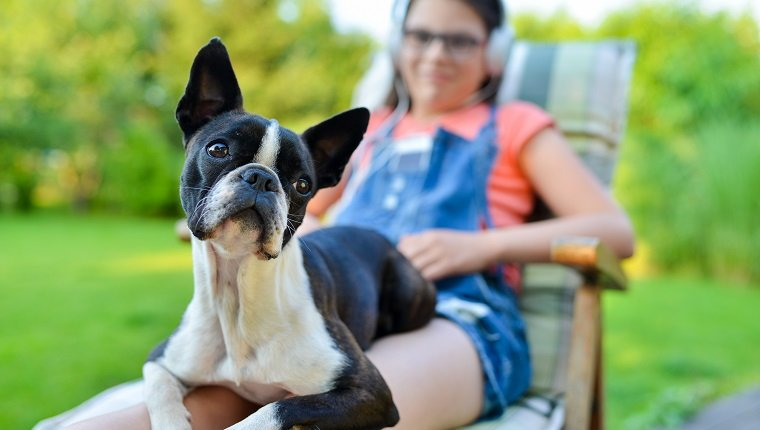 Dog and teenage girl resting in the garden - sweet boston terrier puppy on his lady's lap