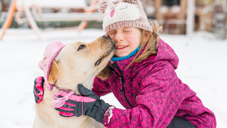 Horizontal image of an 8 years old girl and her yellow labrador retriever dog wearing a pink hat in a cold winter day