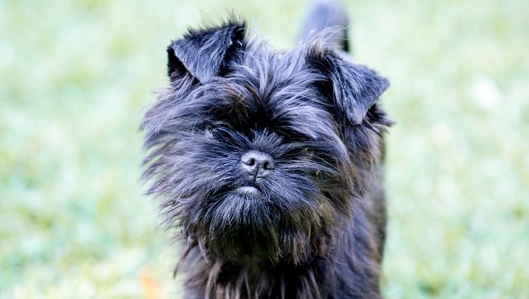 Top 32 Small Breeds That Make Good Apartment Dogs Dogtime