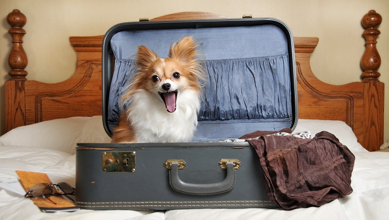 Dog ready to go on a trip sitting in an old beat up suitcase.