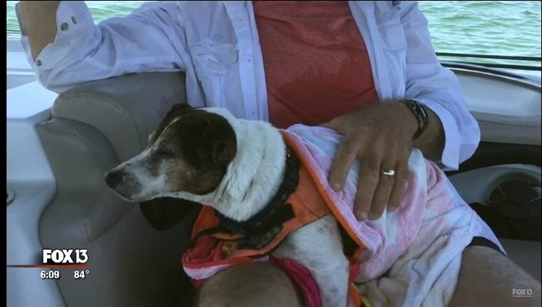 The dog sits on a rescuers lap with a towel wrapped around him.
