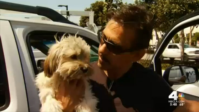 Jack and his owner are reunited.