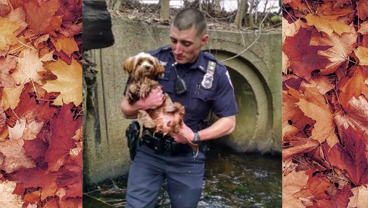 The officer holds the wet dog in his arms.