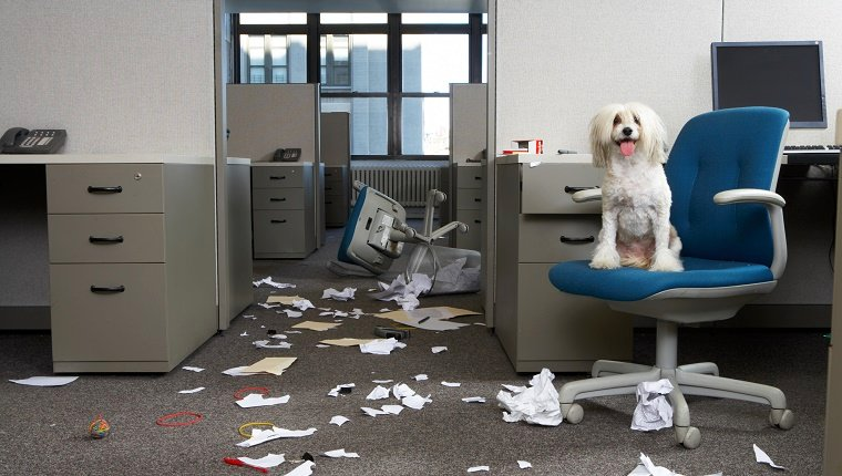 A dog sits on a desk chair surrounded by shredded paper