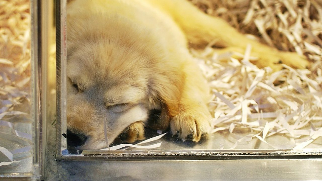 New Jersey Senate Wants To Make Pet Stores Sell Rescue