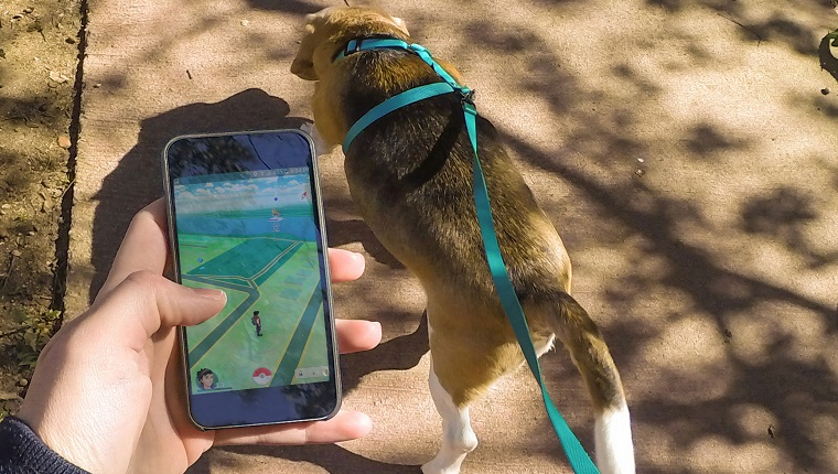 phone with pokemon go next to dog on leash