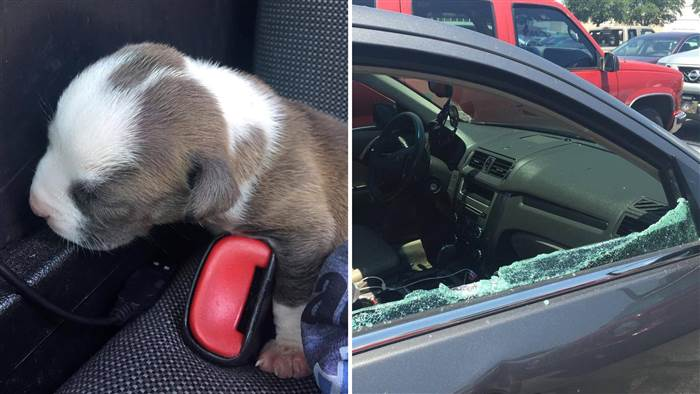 puppy-rescue-from-hot-car
