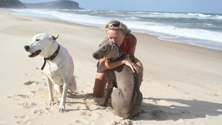 Mature Woman Pampering Dogs At Beach During Sunny Day