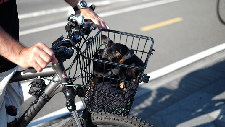 Cropped Image Of Man Riding Bicycle With Dog In Basket