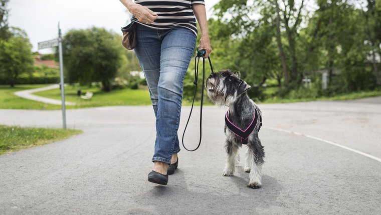 Low section of senior woman walking with dog on street