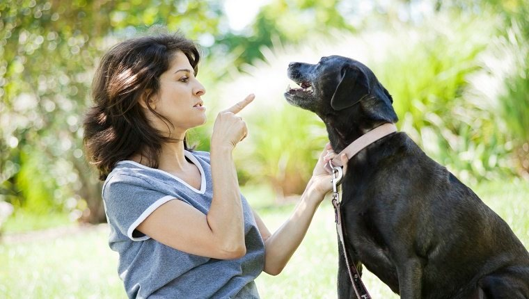 A woman in her 40s pointing at a disciplining her black labrador retriever.