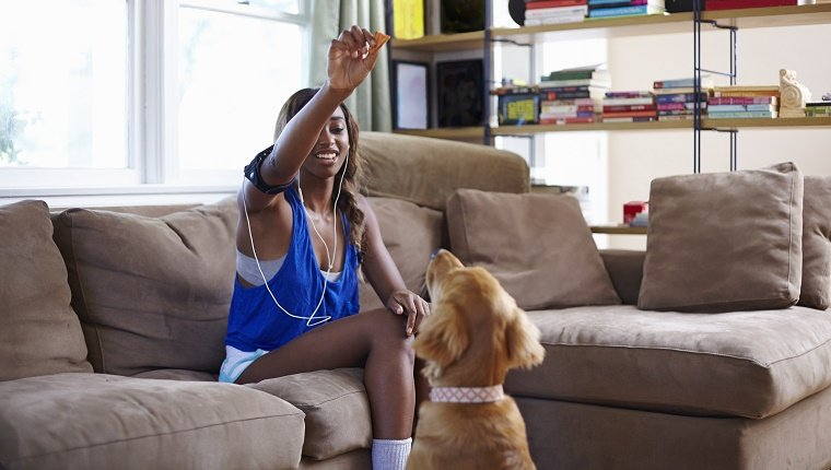 Young woman taking a training break, holding up biscuit for dog in sitting room