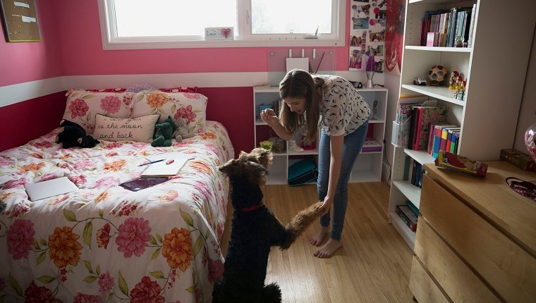 Girl holding treat and shaking dog paw bedroom
