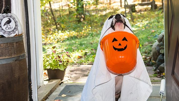 dog in ghost costume with halloween bucket