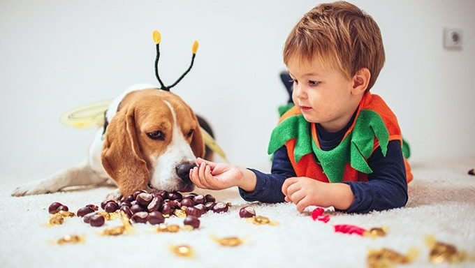 boy giving chocolate to dog in costume