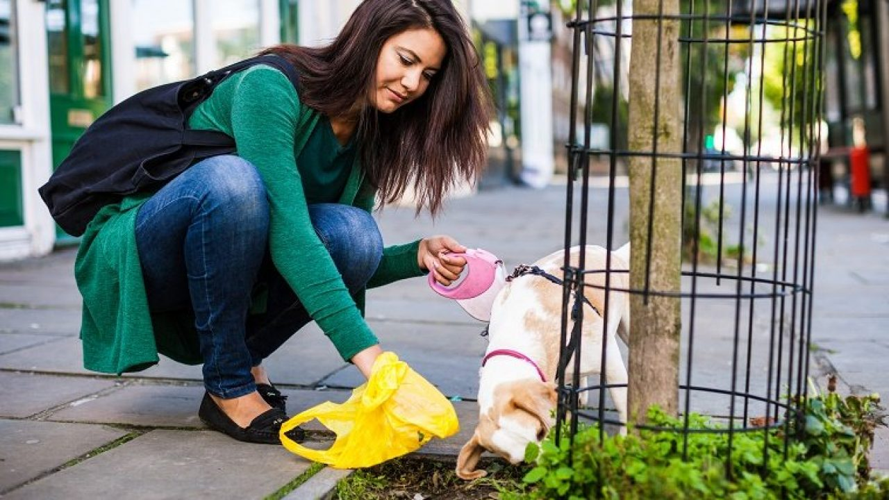 Normal, Soft, Runny, & More: What Your Dog's Poop Tells You