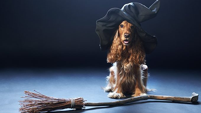 dog with witch hat and broom