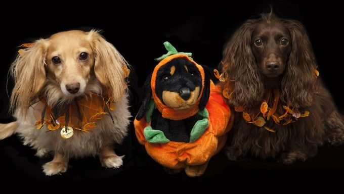 dogs in halloween collars with halloween dog stuffed animal