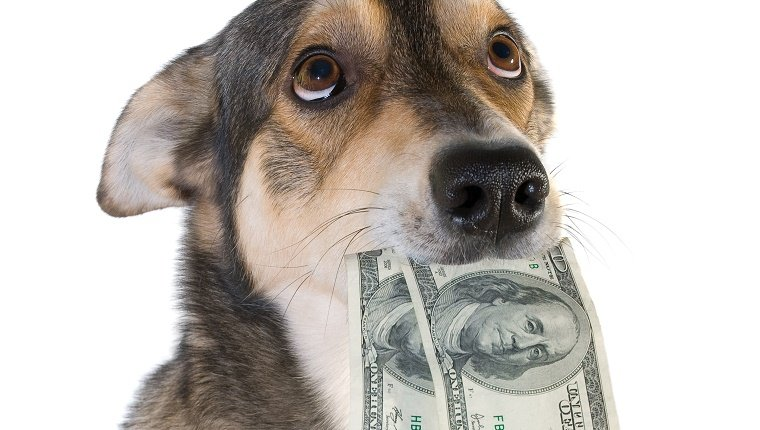 Funny dog holds dollars in mouth, isolated white background