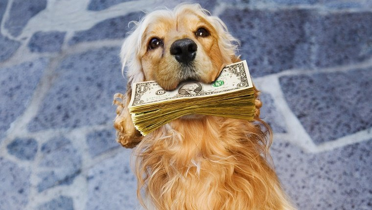 Dog holding pile of paper currency in mouth