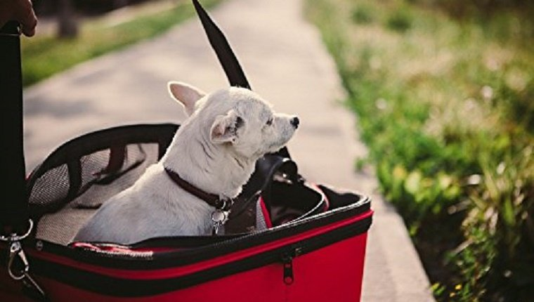 essential-holiday-travel-items-dogs-1