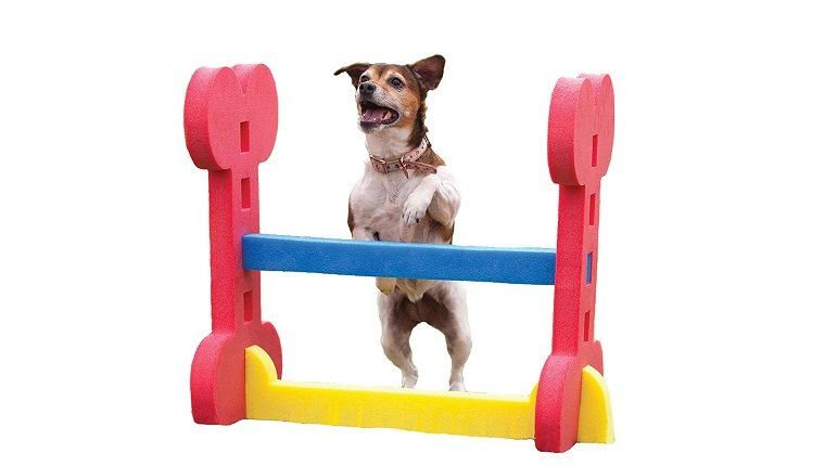 sports dog gifts 9