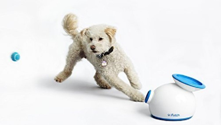 dog-gadgets-gift-guide-1