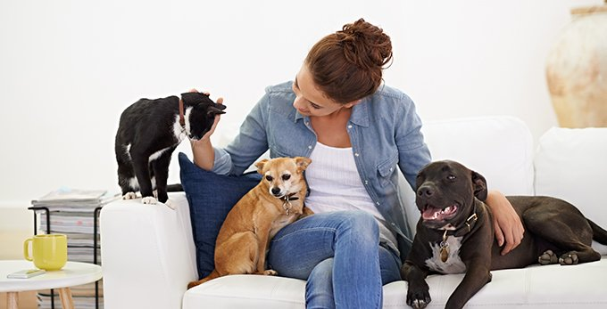 Living With A Large Pet Family In A Small Home