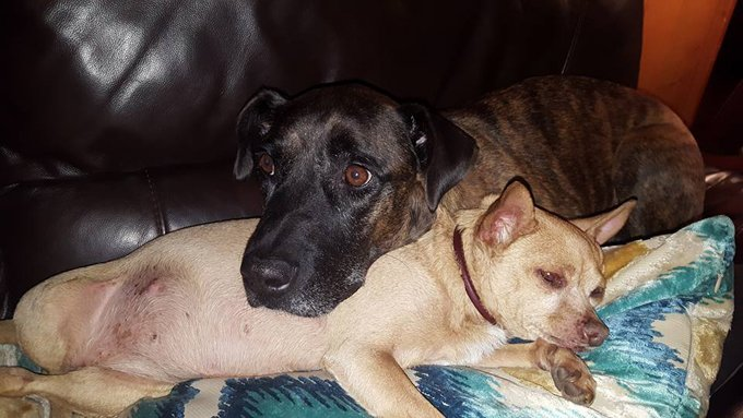 (Joe's new sister Betsy has become a comfort to him. A lucky charm.)