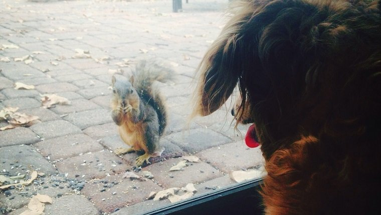 Dog Looking At Squirrel Through Glass Sliding Door on squirrel appreciation day