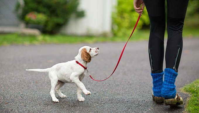 puppy on leash