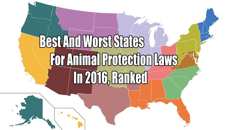 top-states-animal-protection-1