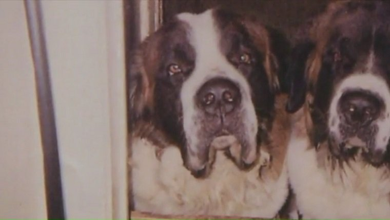 family-dog-killed-by-police-2