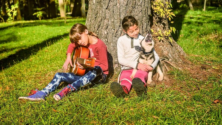 Little girl playing guitar in the park with husky puppy singing