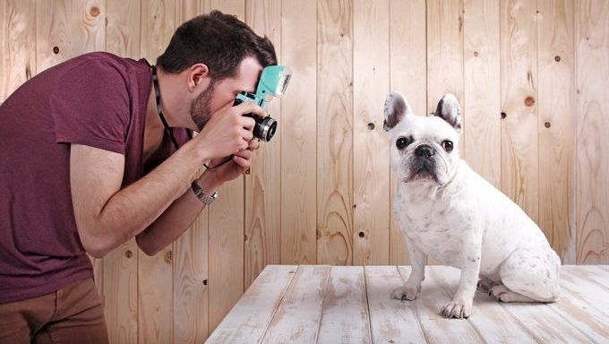 How To Take The Best Pictures Of Your Dog Dogtime Take a photo with the camera on your iphone or ipad. pictures of your dog