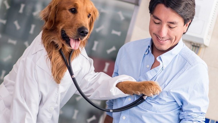 Dog at the Vet checking on a human patient